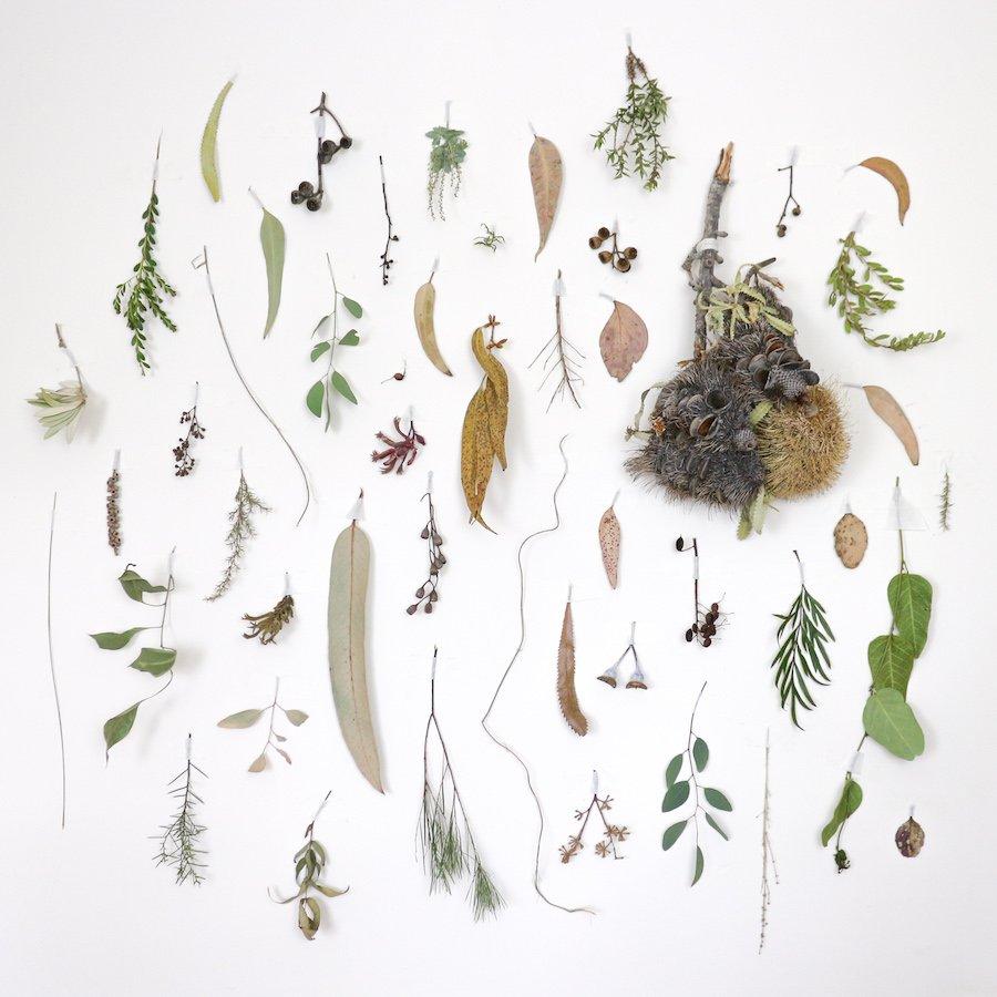 Australian native flora wall 1 by Belinda Evans - Alchemy