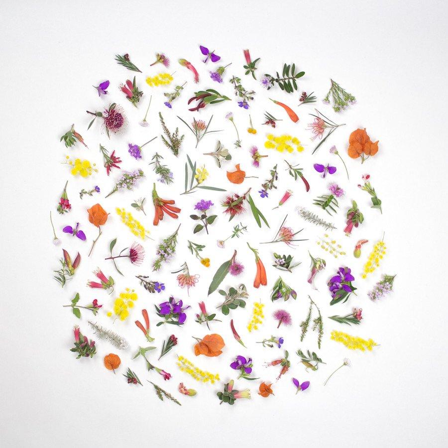 Eltham Wildflowers by Belinda Evans