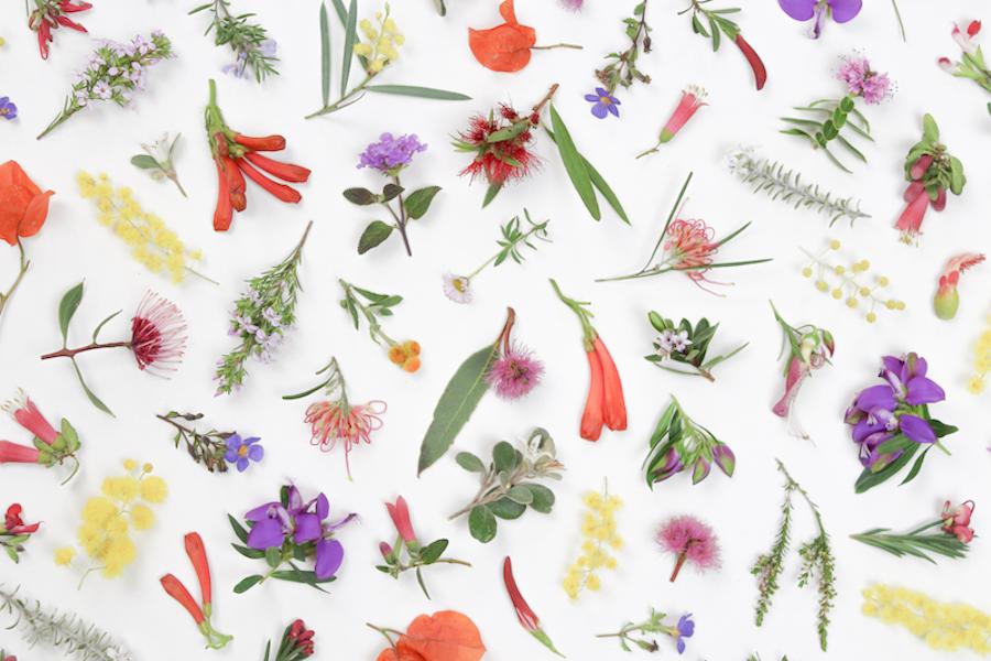 Eltham Wildflowers detail by Belinda Evans - Alchemy