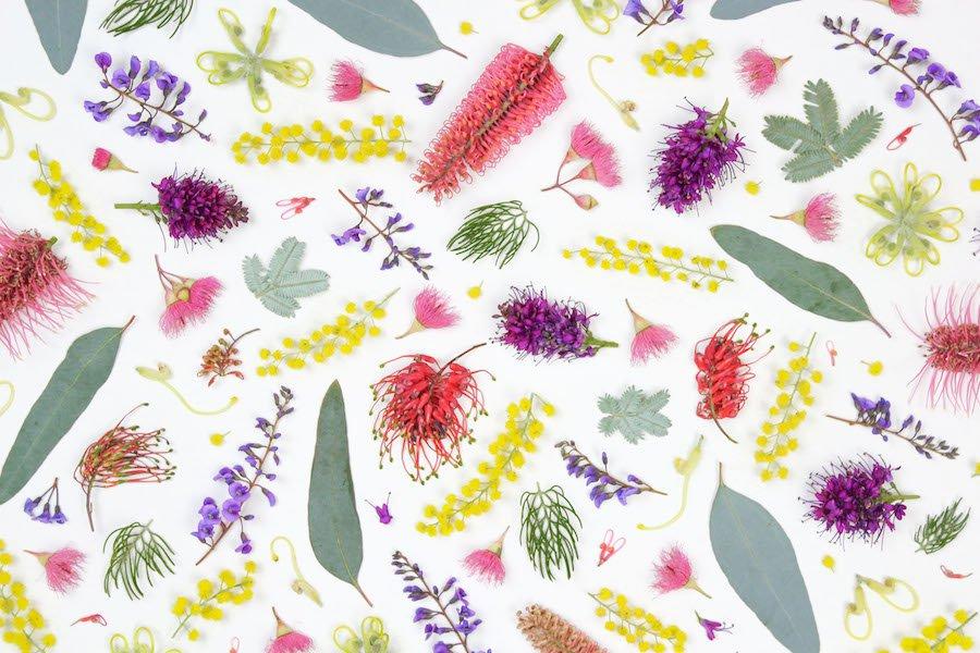 Winter wildflowers detail by Belinda Evans - Alchemy